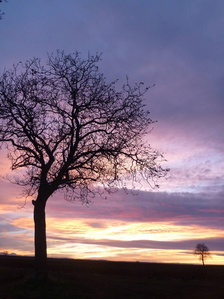 arbre et couchez de soleil