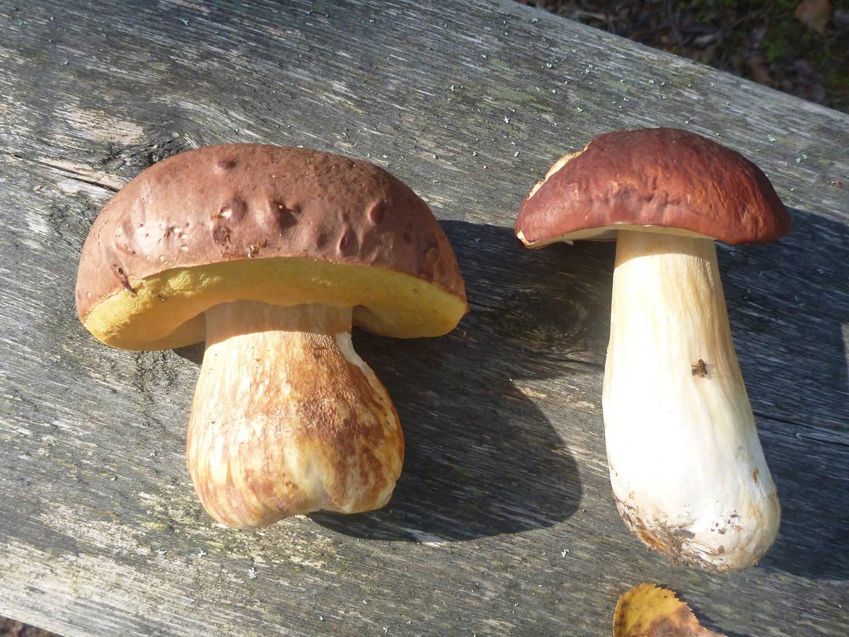Good mushrooms !