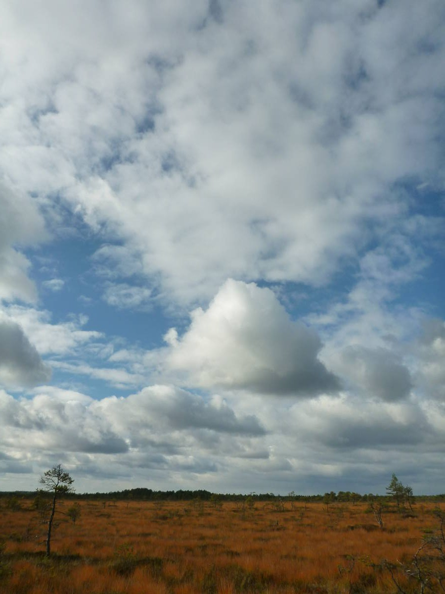 Un paysage de toundra africaine