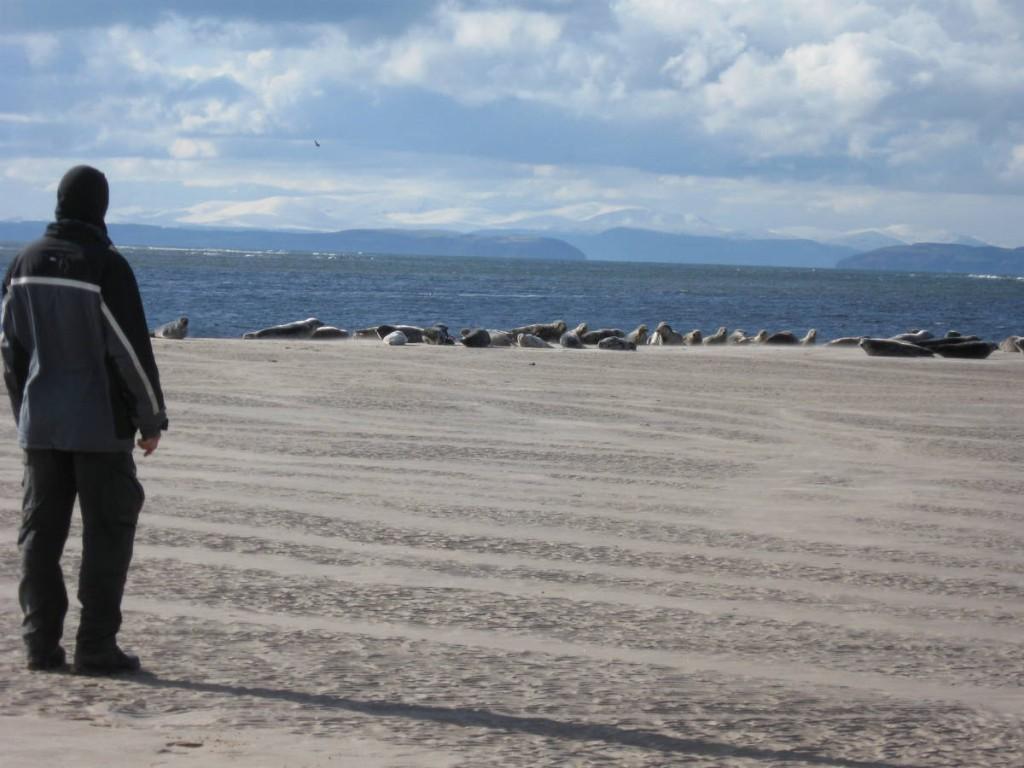 Les otaries au bord des plages