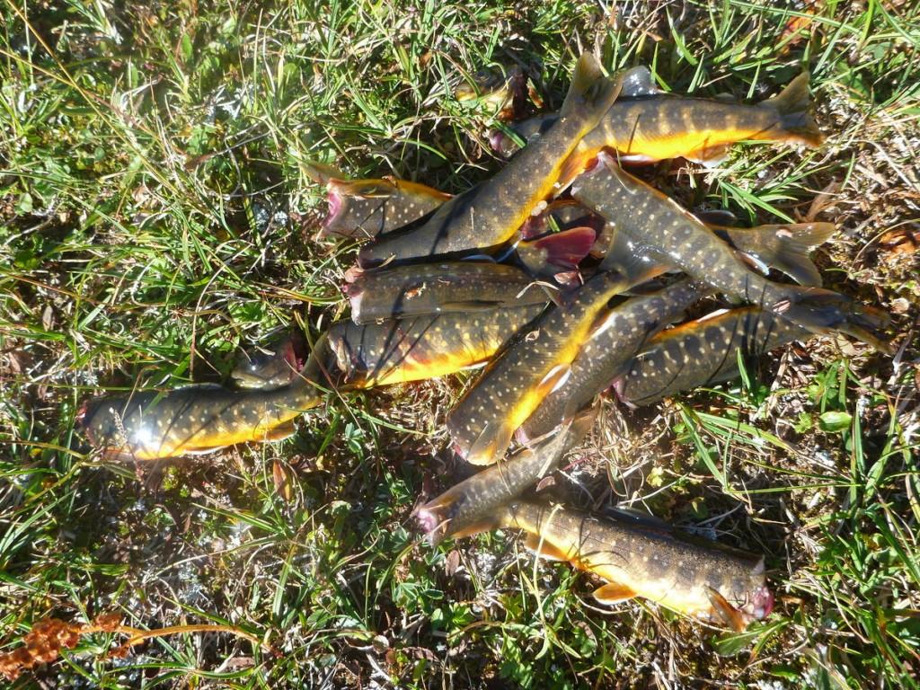 Sondre nous apprend à attraper les poissons à mains nues. Pas si facile !