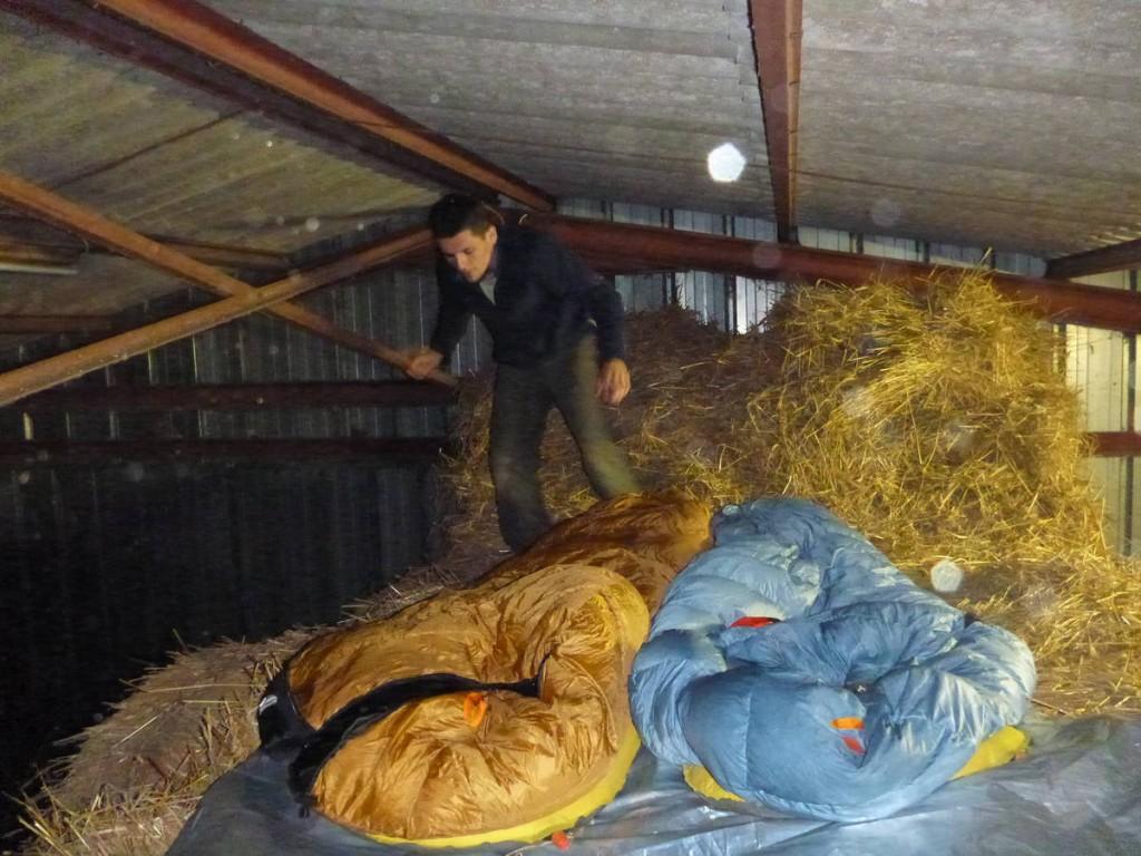 Nuit rigolote dans la stabulation d'un fermier; Deux gros bœufs en dessous ainsi qu'un sympathique coq nain ayant absolument manifester sa joie de vivre à cinq heures du matin