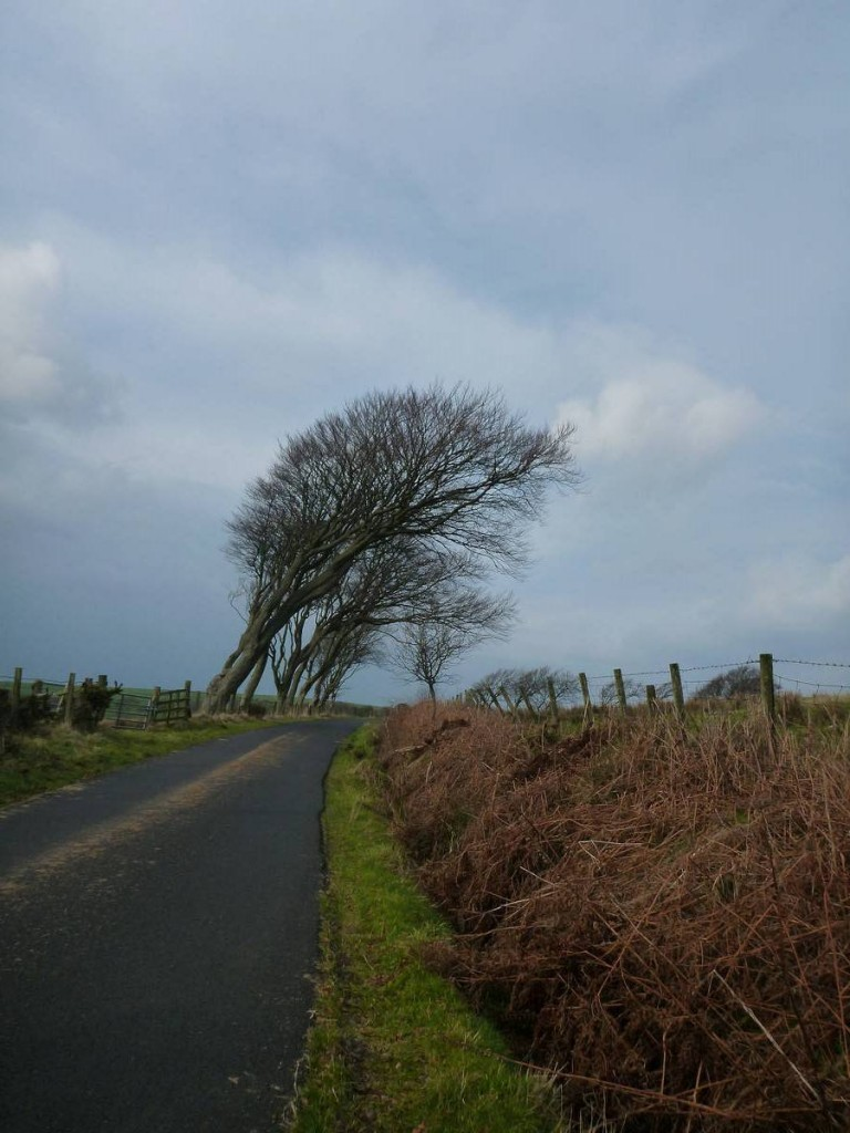 Le vent souffle très fort