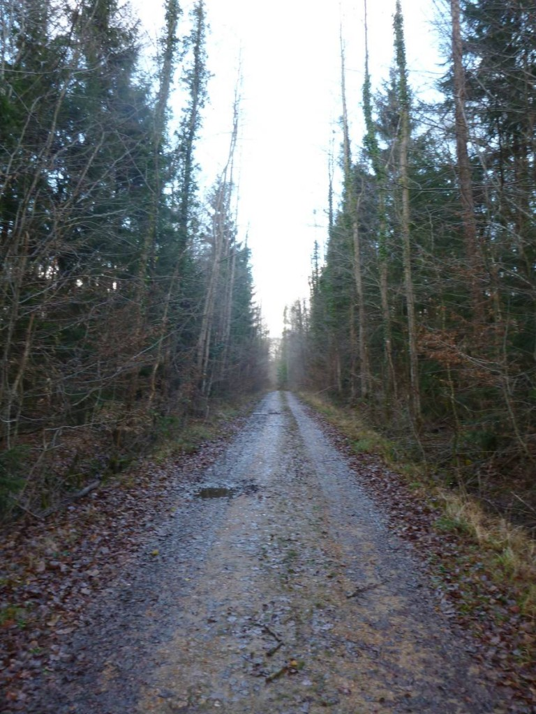 La forêt de Perseigne m'offre un agréable moment de marche