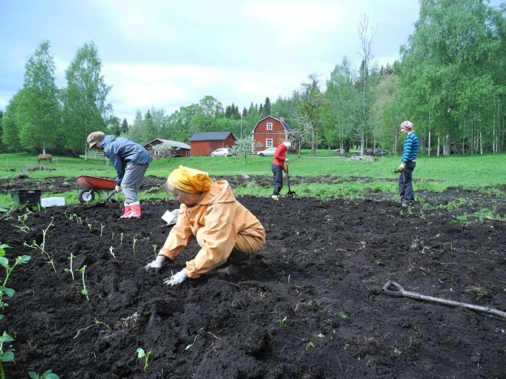 Beaucoup de jardinage