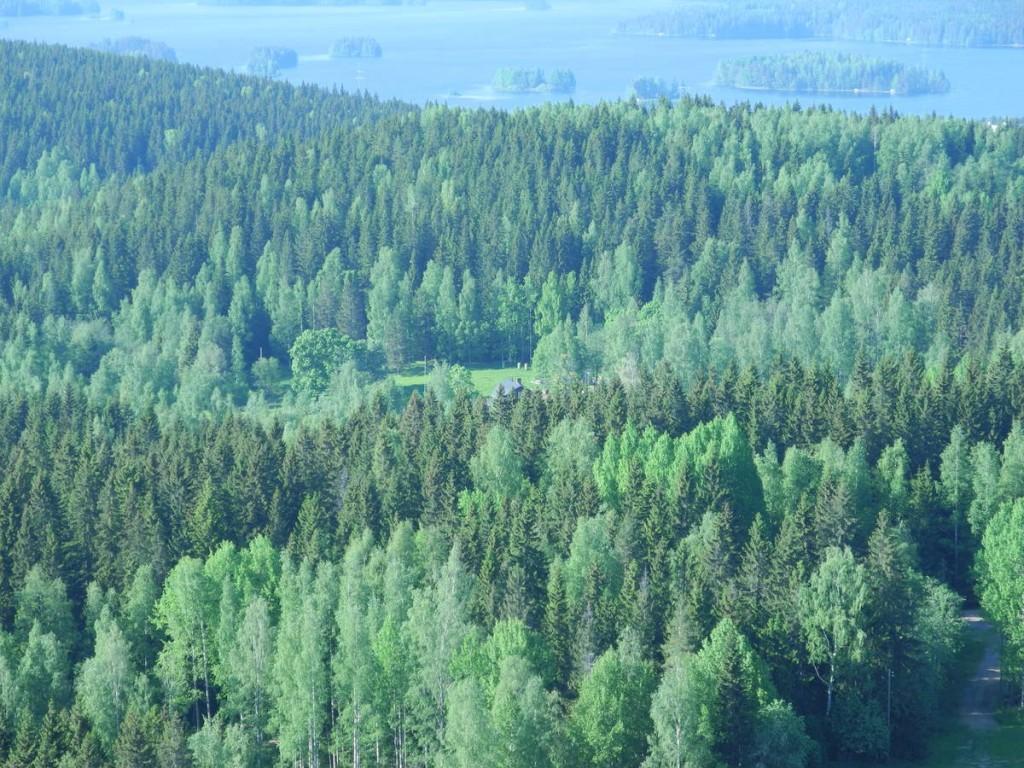 Nous pouvons apercevoir la ferme de Konttila au centre la forêt