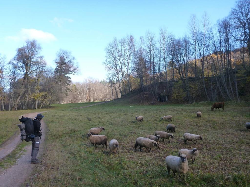 Il n'y a pas grand monde si ce n'est de joyeux moutons