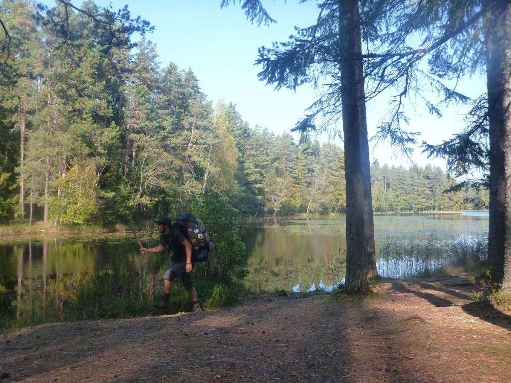 Je poursuis dans les immenses forêts d'estonie