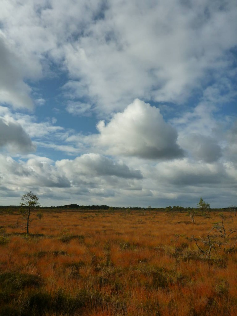 Des paysages de savane...