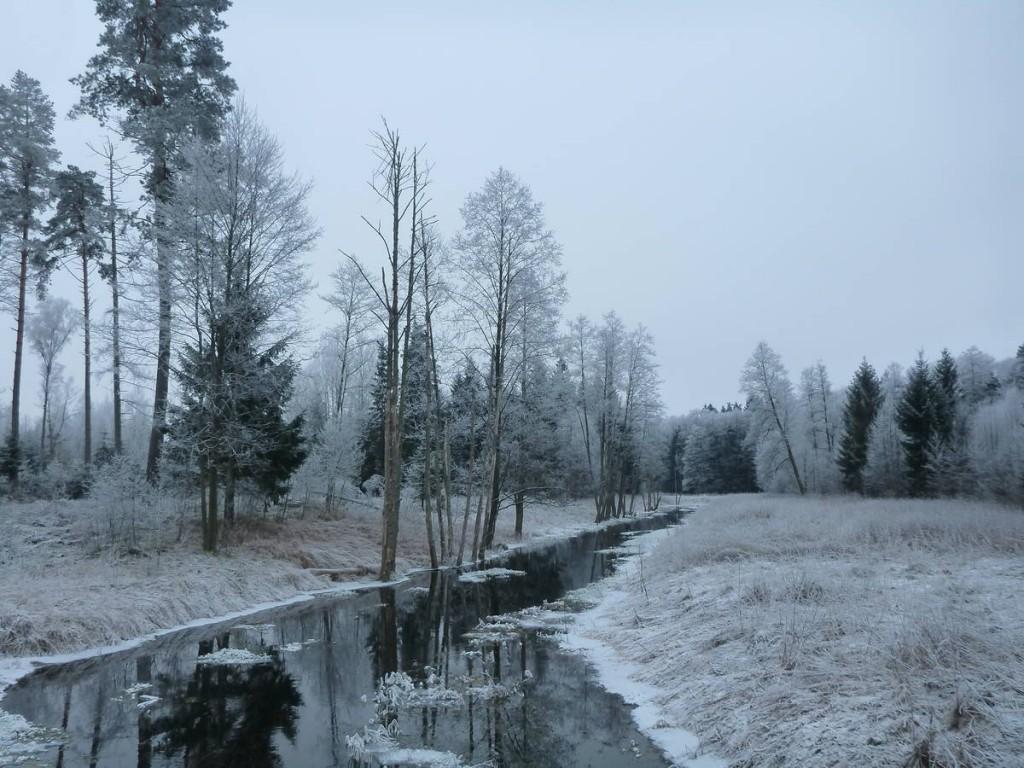Les forêts m'apparaissent gelées et silencieuses