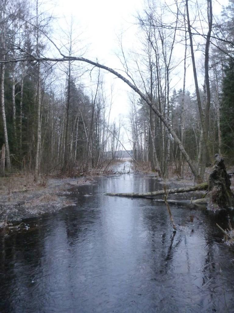 Une rivière-marécage ayant débordée et gelée que je doit traverser malgré la très fine épaisseur de la glace