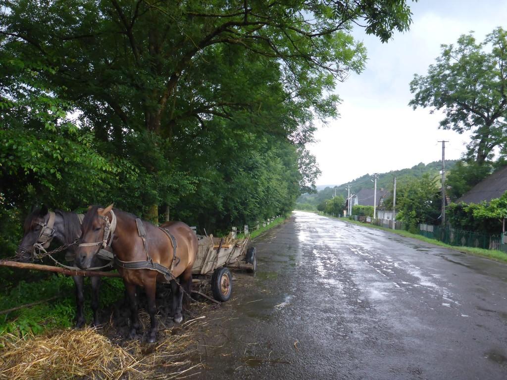 Le cheval est très utilisé, principalement pour transporter les troncs d'arbres