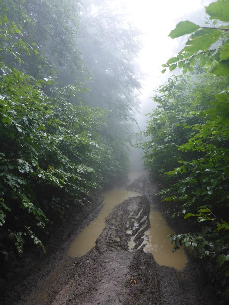 De retour en bas, la pluie transforme les chemins en de vraies piscines. Mes chaussures baignent dans l'eau