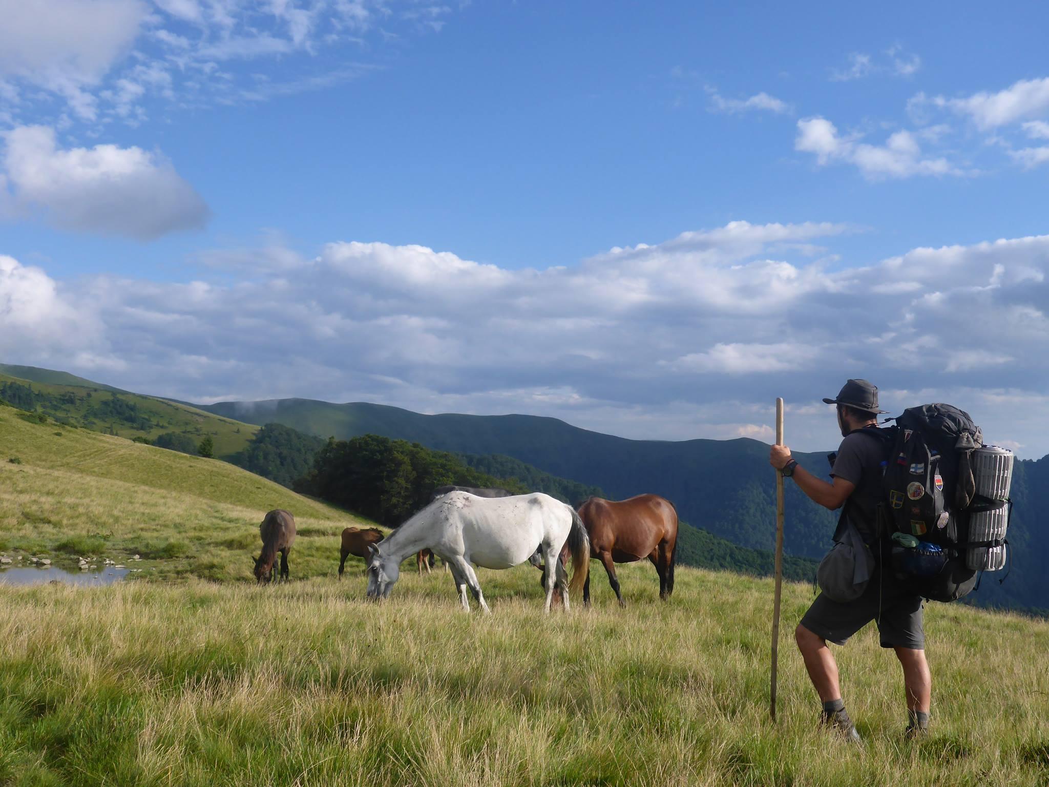 Des chevaux en semi-liberté vagabondent autour de moi; L'instant est féerique tant je ne m'y attendais pas