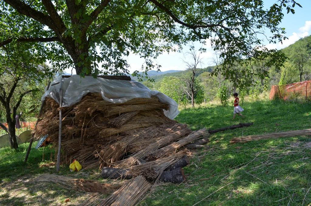 Le travail principal consiste à finir le toit de la maison de Adi. Pas moins de cinq tas de joncs de la sorte ont été nécéssaire en trois été