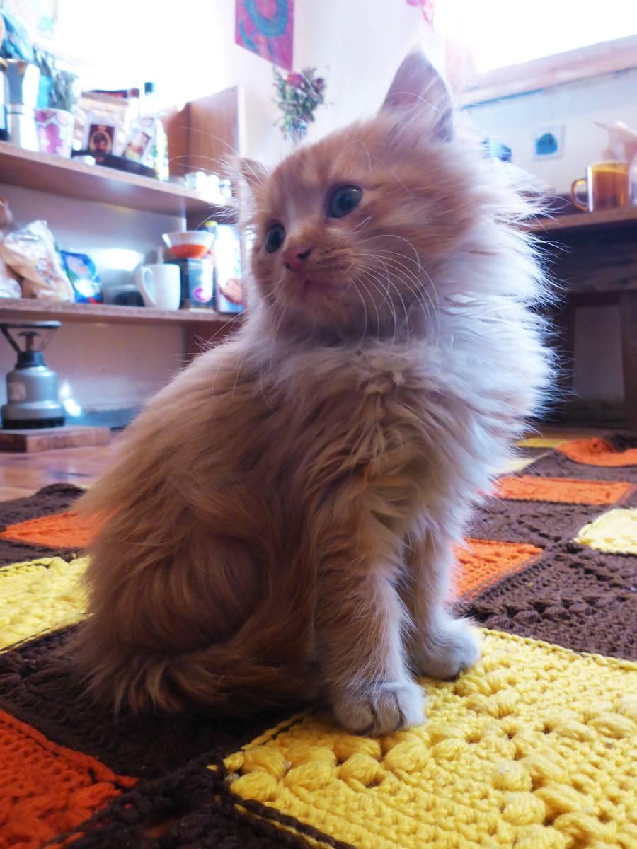 Shamsi, un drole de bébé chat qui se faufilait à l'intérieur de mon sac de couchage chaque nuit