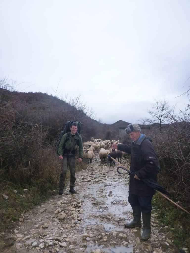 Les bergers sont bien sympas