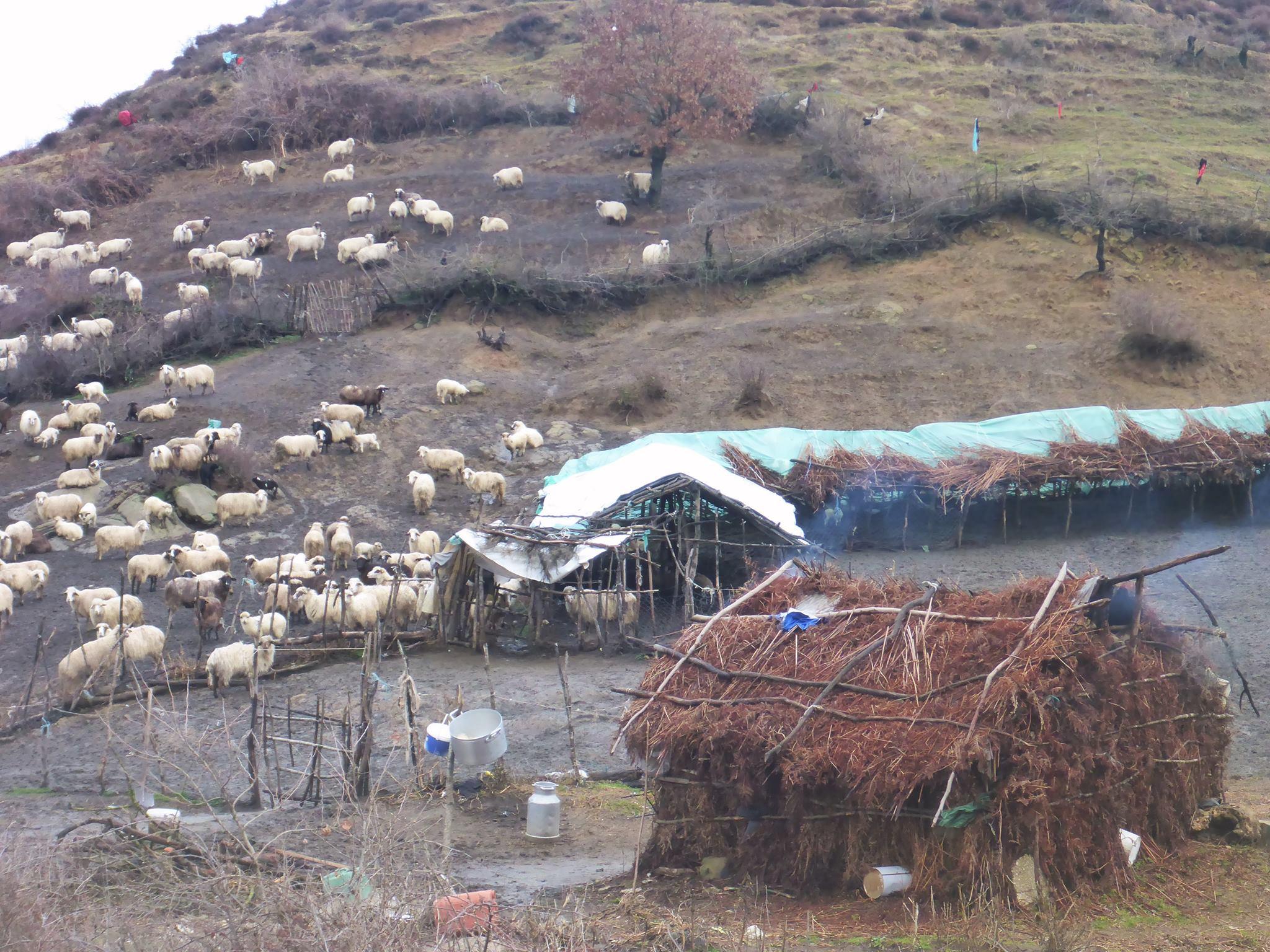 Une de leurs cabanes dans lesquels nous surprenons un hommes et sa femme se réveillant tout juste