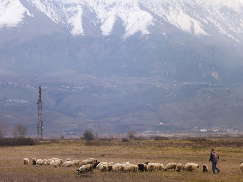 De nombreux bergers et leurs moutons dans la vallée