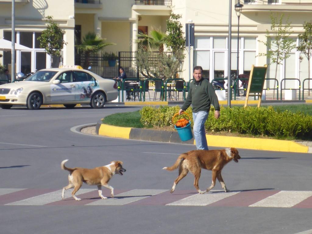 Beaucoup de chiens errants mais pas forcéments agressifs, plutôt même peureux et étrangement civilisés !