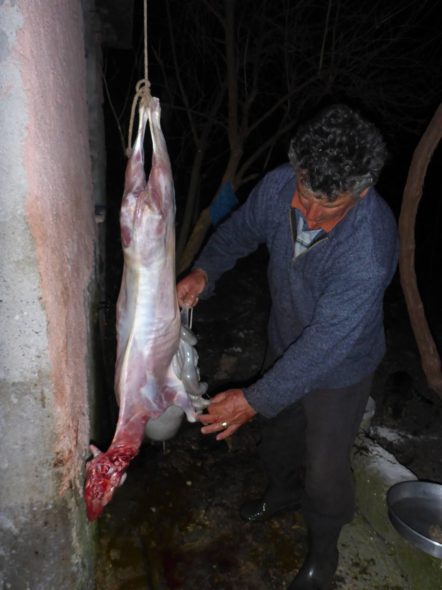On tue le mouton le soir même !