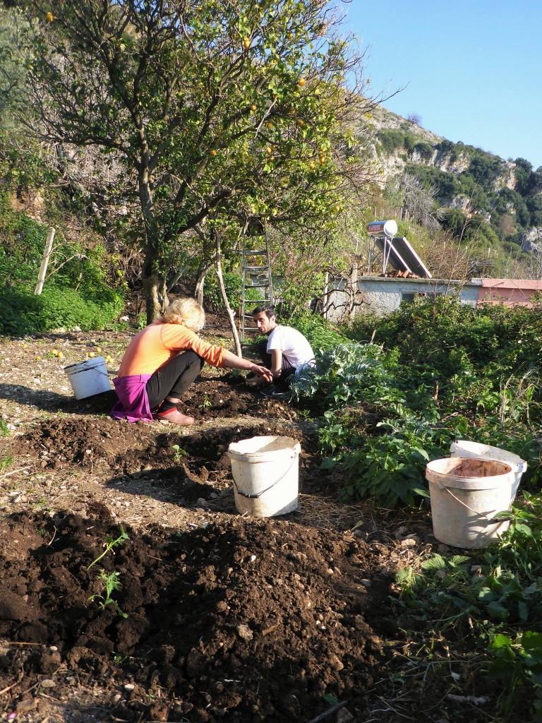 C'est le temps des plantations de légumes