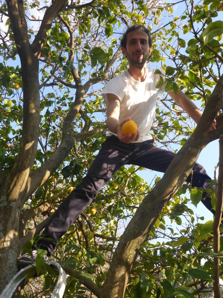 Citronniers et orangers se trouvent par dizaines dans la propriété de la famille
