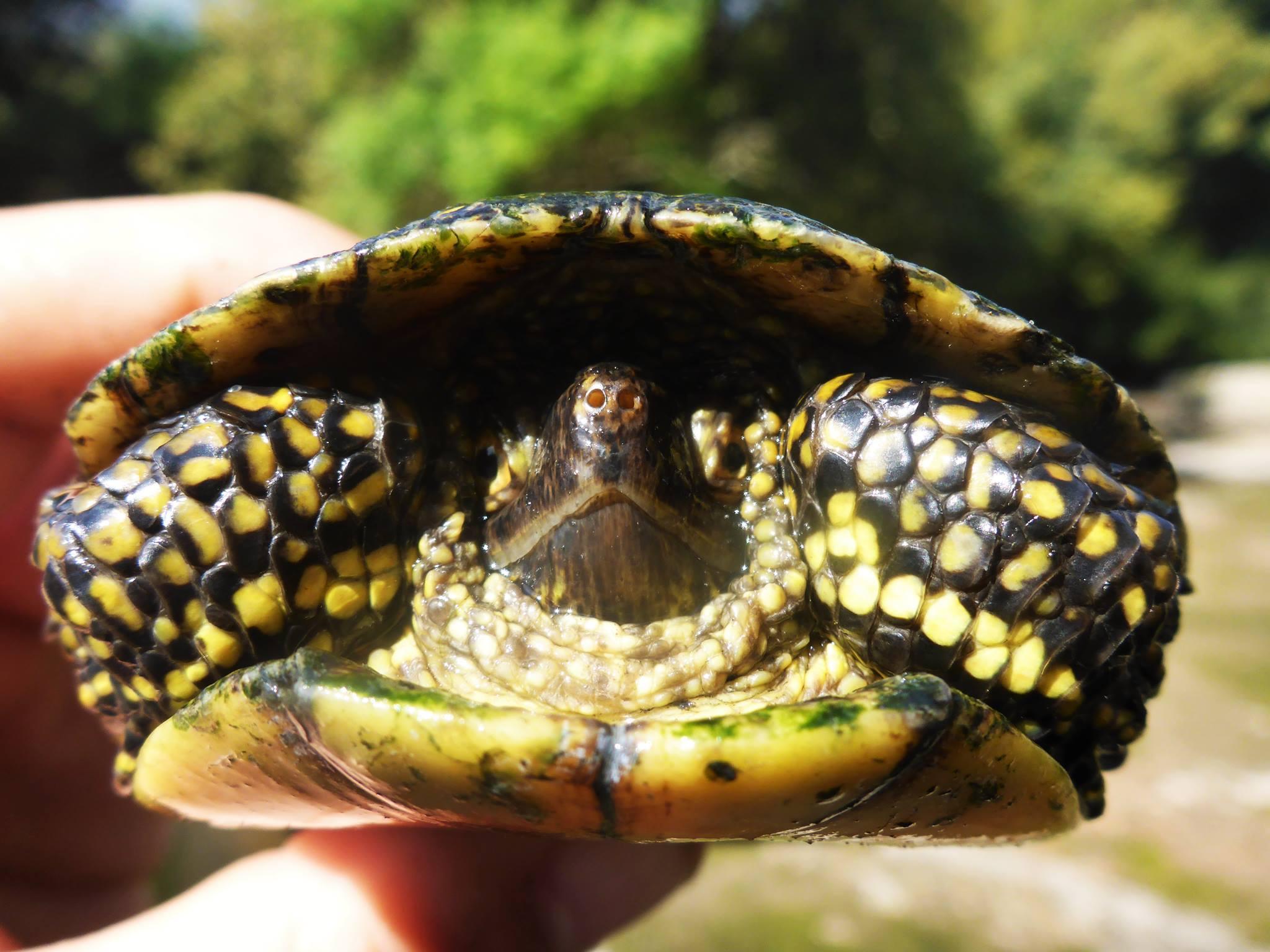 Pleins de jolies tortues dans les environs.