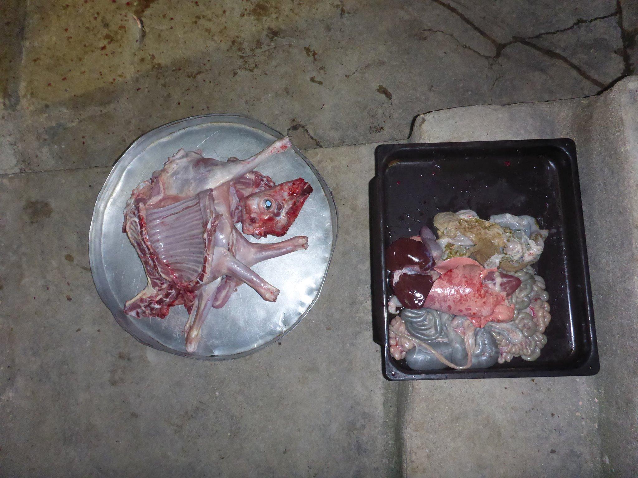 Au final il n'y a pas forcément beaucoup de viande. Tout au plus huit kilos !