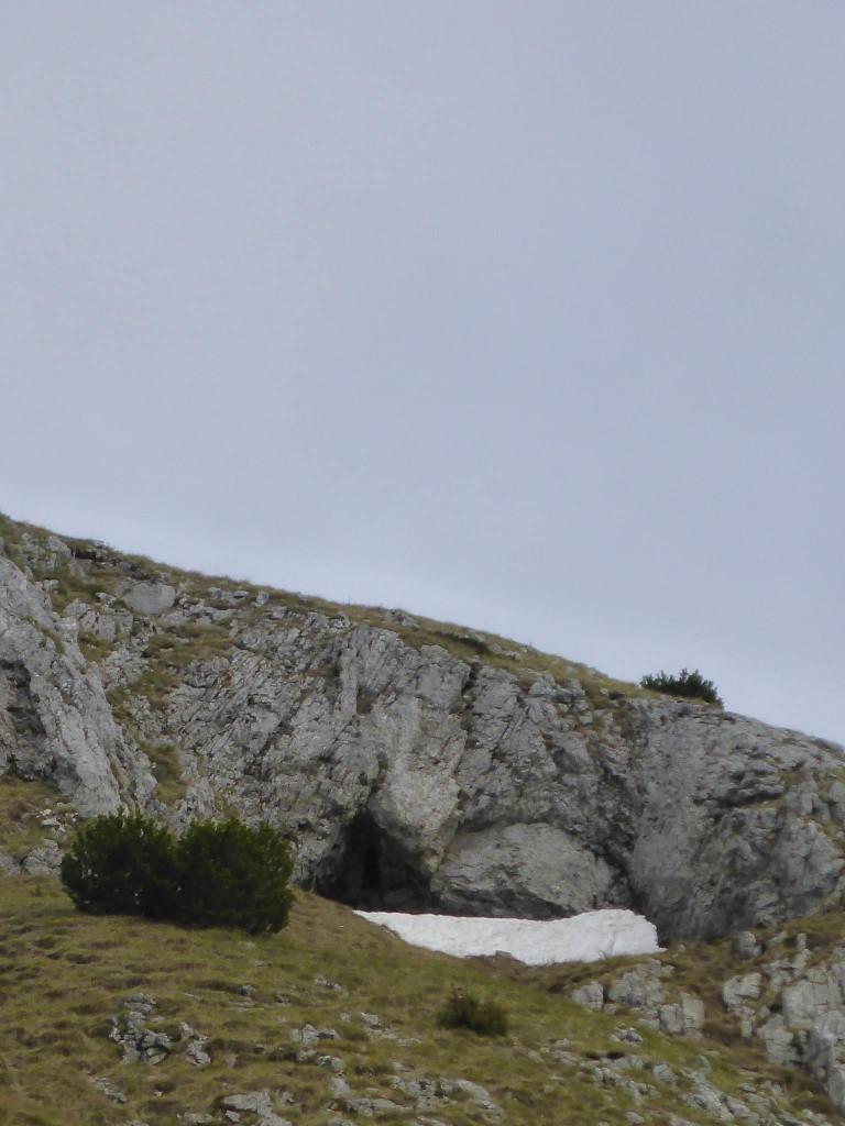 Je les suis de loin et découvre leur caverne où j'ai le temps d'appercevoir les oursons grimpant la neige pour se mettre à l'abri à l'intérieur