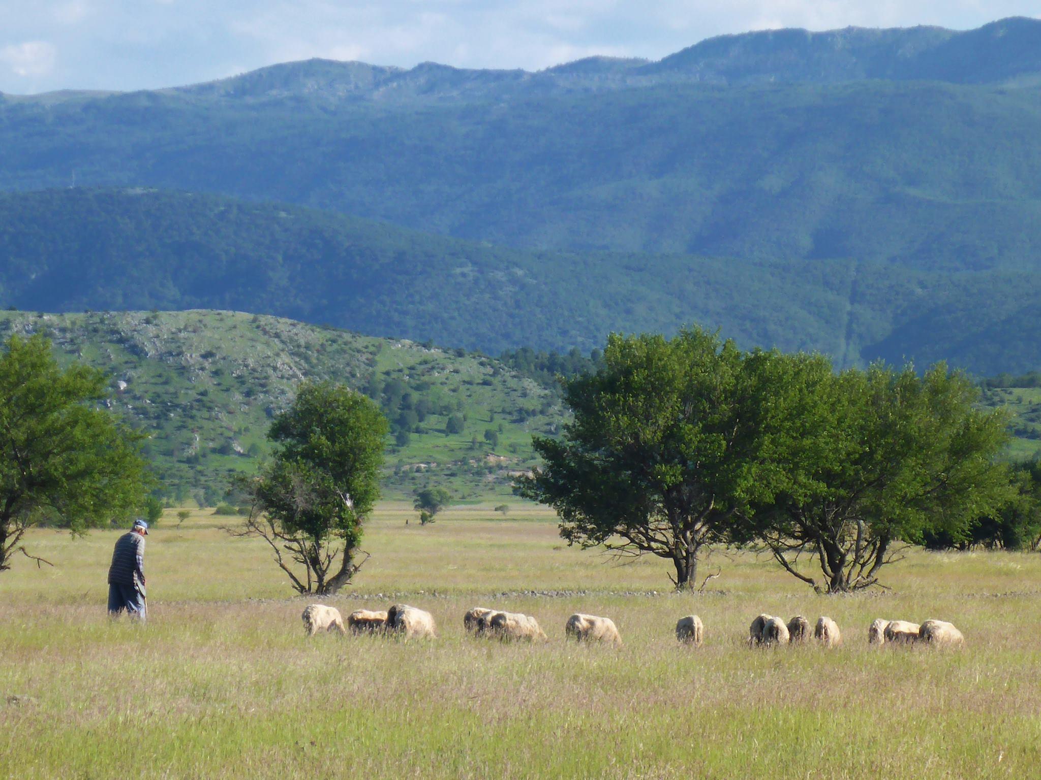 Les bergers sont toujours de curieux et beaux personnages